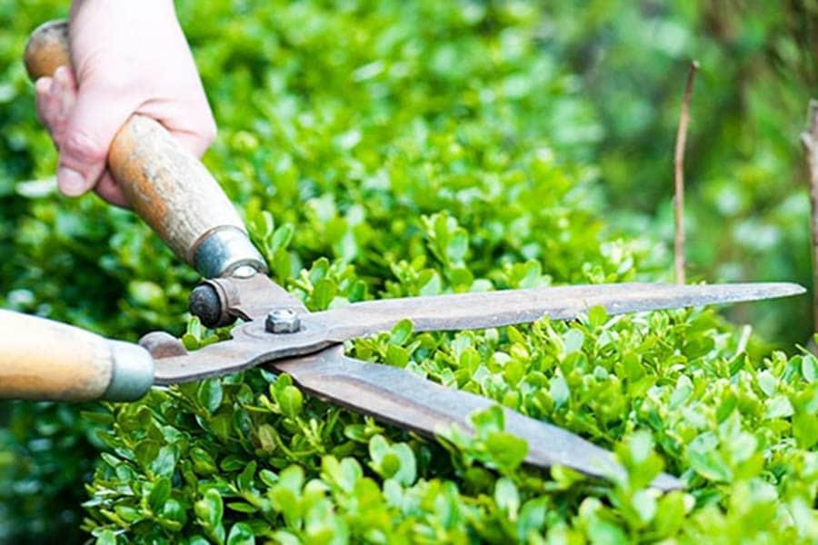 Kinh doanh dịch vụ chăm sóc bãi cỏ, chăm sóc cây cảnh.
