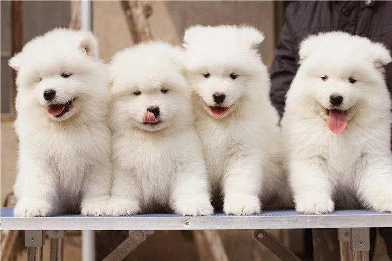 Kinh doanh dịch vụ mua bán chăm sóc thú cưng.