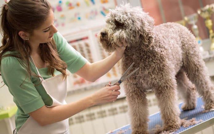 Kinh doanh dịch vụ spa, grooming, chăm sóc thú cưng.